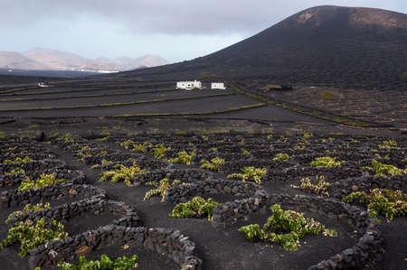 vineyard region of Lanzarote; Canary Islands
