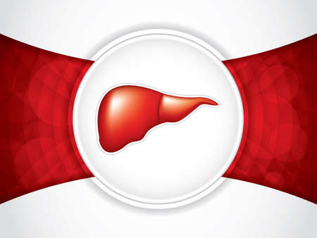Liver on red and white background illustration.