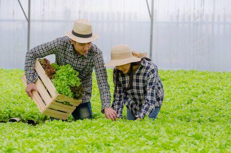 Foto per young asian couple farmer harvesting fresh green oak lettuce salad, organic hydroponic vegetable in greenhouse garden nursery farm, agriculture business, organic vegetable farm, healthy food concept - Immagine Royalty Free