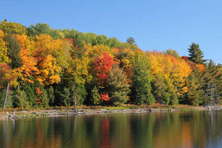 Bright coloured autumn trees reflecting on calm lake, Ontario, Canada