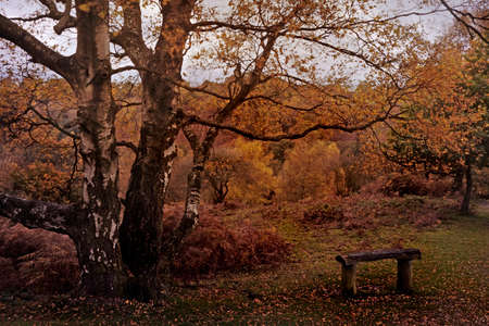 The Autumn colours on Barlaston Downs in Staffordshire are beautiful to behold