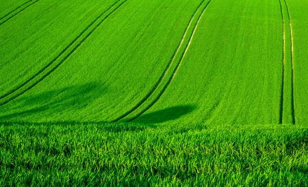 Photo pour A rolling green wheat field on a hill with four seperate lines of tractor tyre tracks running vertically up the green field, Sussex, England  the lines in the field form graphic and shapes - image libre de droit