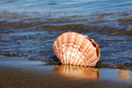 a shell lies on the sandy beach next to the sea. beautiful memories of your last vacation.