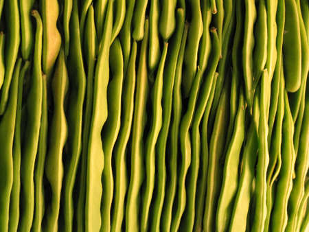fluted pattern of assorted bright green beans