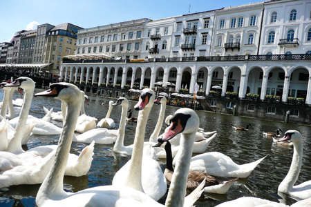 the maiden steeg in hamburg (germany) with swans in the foreground.