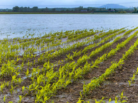 flooding in agriculture