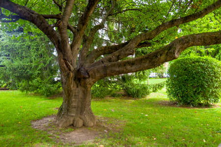 tree with strong branches, a symbol of strength, networking, experience