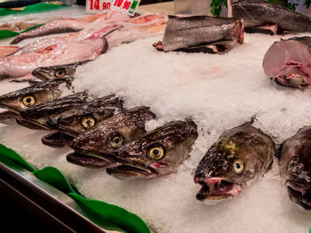 freshly caught fish lying on a fish market in the ice