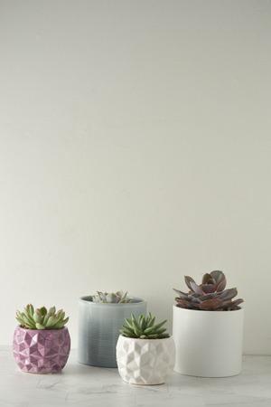 Photo pour Succulent plant. A group of echeverias on white table. Copy space. - image libre de droit