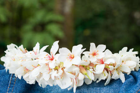 Photo for Tung blossom - Royalty Free Image