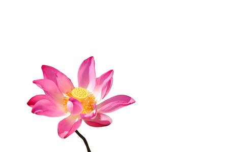 Photo for Beautiful lotus flower in the pond. This is the flower of the Buddha. - Royalty Free Image