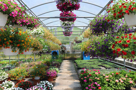 Greenhouse with colorful flowers
