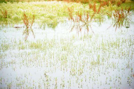 A smooth and clear pond in a wild meadow with reflections from erupting grasses.