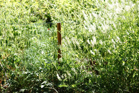 The close up of wild growing nettles and wild herbs on a pasture fence with wire.