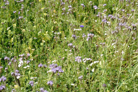 A wild meadow on a hill with different flowers, grasses and herbs with the sky as background.