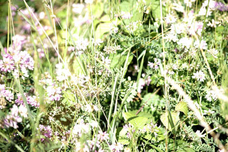 A wild meadow with various wildflowers as well as clover, herbs and grasses.