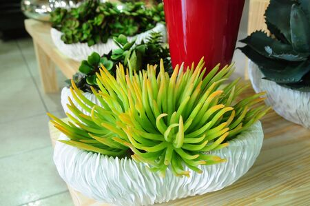 Photo for decorative mini gardens for indoor and outdoor - Royalty Free Image