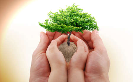 A green tree in the baby's and man's hand