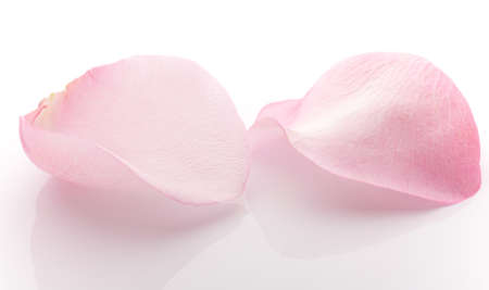 Rose petals isolated on the white background.
