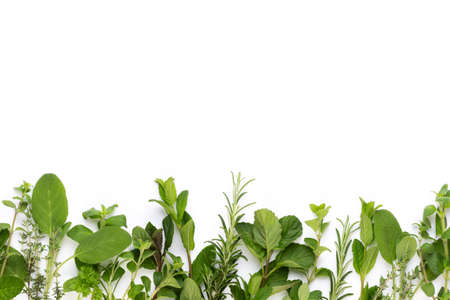 Photo for Spice plant isolated on white background. Top view. Flat lay pattern. - Royalty Free Image