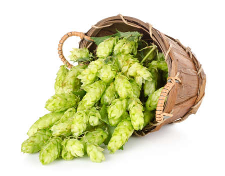 Hops in a wooden basket