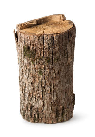 Foto de Big stump isolated on a white background - Imagen libre de derechos