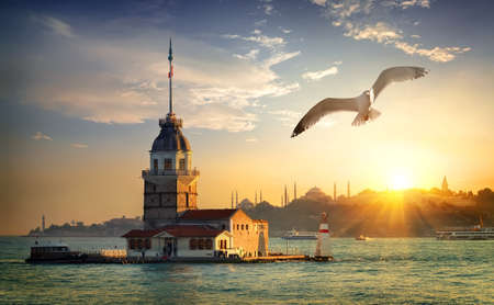 Photo for Seagull and Maiden Tower - Royalty Free Image
