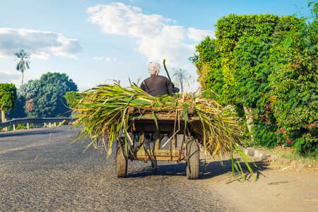 Photo for Egyptian peasant in a cart - Royalty Free Image