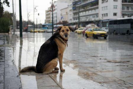 Homeless dog sitting near the road under the rain