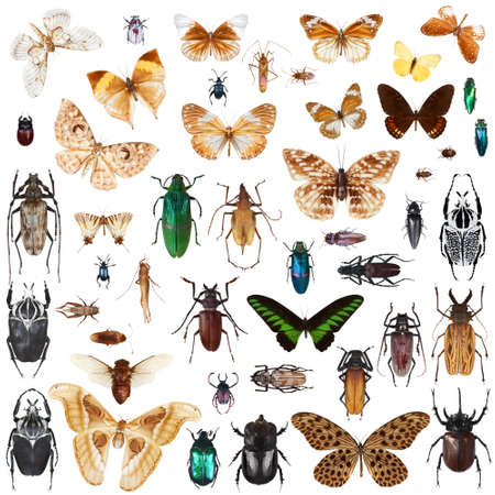 Set of insects on white background