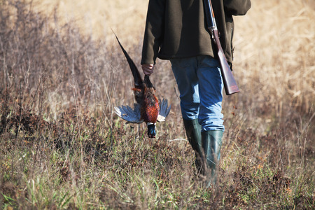 Back of going hunter with killed pheasant in hunter's hand