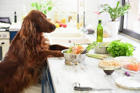 Foto de Cooking vegetarian food for pets. In the interior. - Imagen libre de derechos