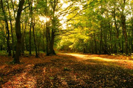Sunlight through the autumn trees
