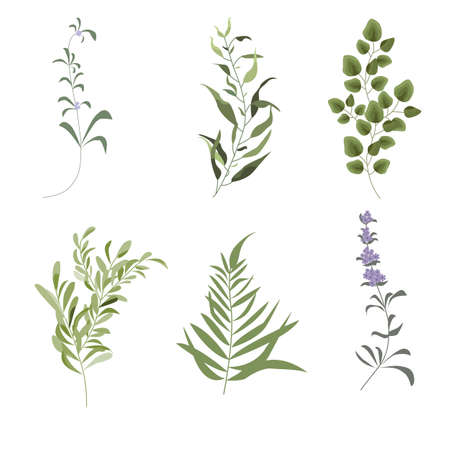 Illustration pour Vector designer elements set of green forest fern, tropical green eucalyptus greenery art foliage natural leaves herbs in watercolor style. Decorative beauty elegant illustration for design, wedding and invitation cards - image libre de droit