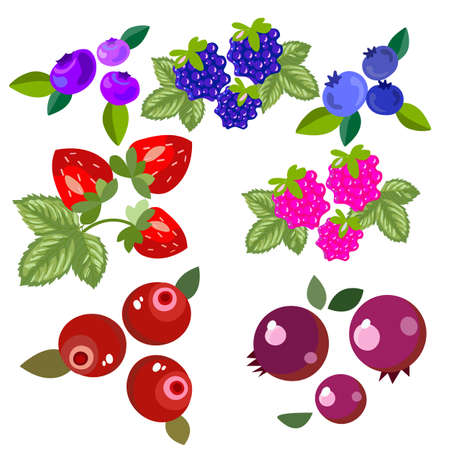 Illustration pour Set of forest and garden berries. Bright, beautiful and delicious fruits, for the design of postcards, banners, labels. Vector illustration - image libre de droit
