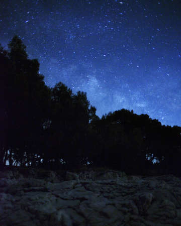Night landscape with stars and forestの写真素材