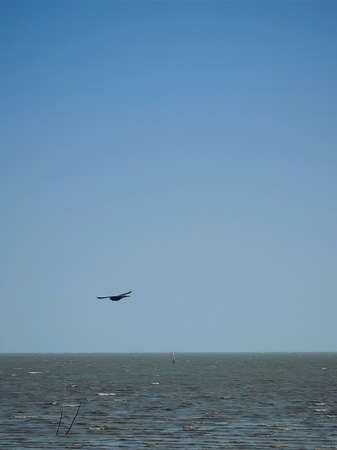 A lonely bird fly above the sea