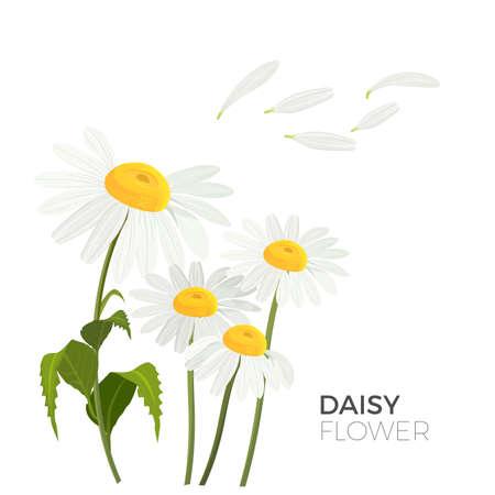Ilustración de Daisy flowers with white petals and yellow middle realistic vector - Imagen libre de derechos