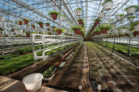Multi-level greenhouse isolated from low external temperatures for growing fruit and vegetable crops. Saplings in pots and beds.