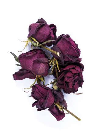 Foto für Old dry roses on the white background - Lizenzfreies Bild