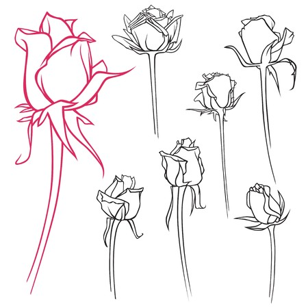 A set of vector contour roses
