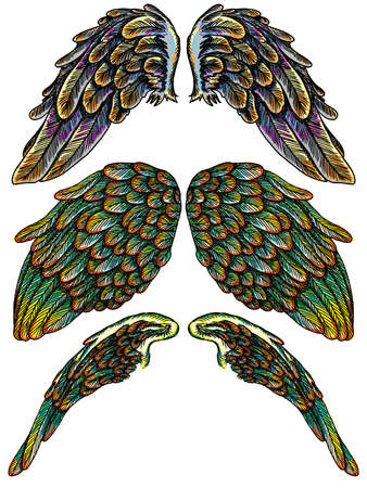 Set Of Colourful Bird Wings Of Different Shape In Open