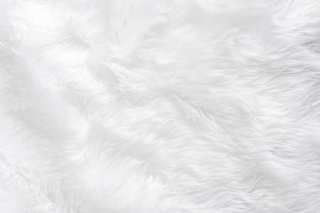 Photo pour Closeup animal white wool sheep background in top view light natural detail, grey fluffy seamless cotton texture. Wrinkled lamb fur coat skin, rug mat raw material,  fleece woolly textile concept  - image libre de droit