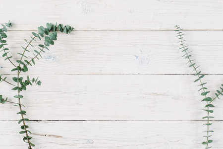 Photo pour Spring plant over wood background. Decorative plant branch top view on white wooden background with free space. Rustic background with flat lay green plant. - image libre de droit