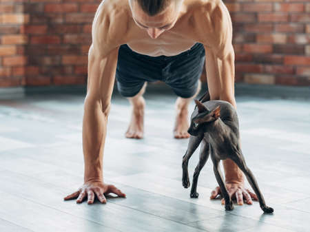 Photo for yoga training for strong and toned muscles. plank pose. healthy and fit man's and cat's body. sport wellness and athletic lifestyle for people and pets. - Royalty Free Image