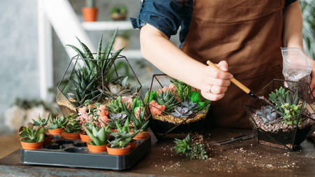 Photo pour DIY florarium. Housewife business idea. Cropped shot of woman planting and growing succulents at home. - image libre de droit