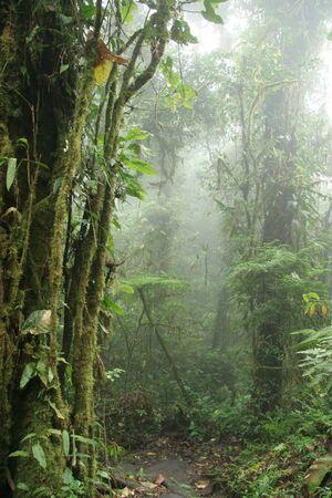 Monteverde Cloud Forest Nature Preserve  Shrouded in Mist - Costa Rica