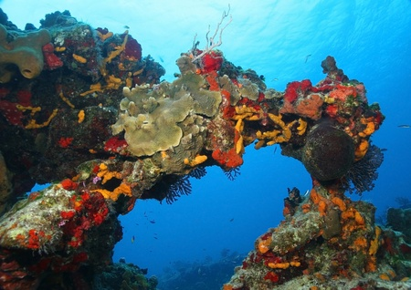 Coral Reef Forming an Arch - Cozumel, Mexico