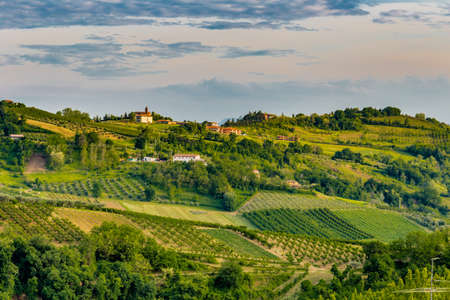 the relaxing view of the fields of olive trees and peach trees of the hilly countryside of Emilia Romagna in Italy