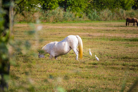 White Heron is friendly having a good time with horse